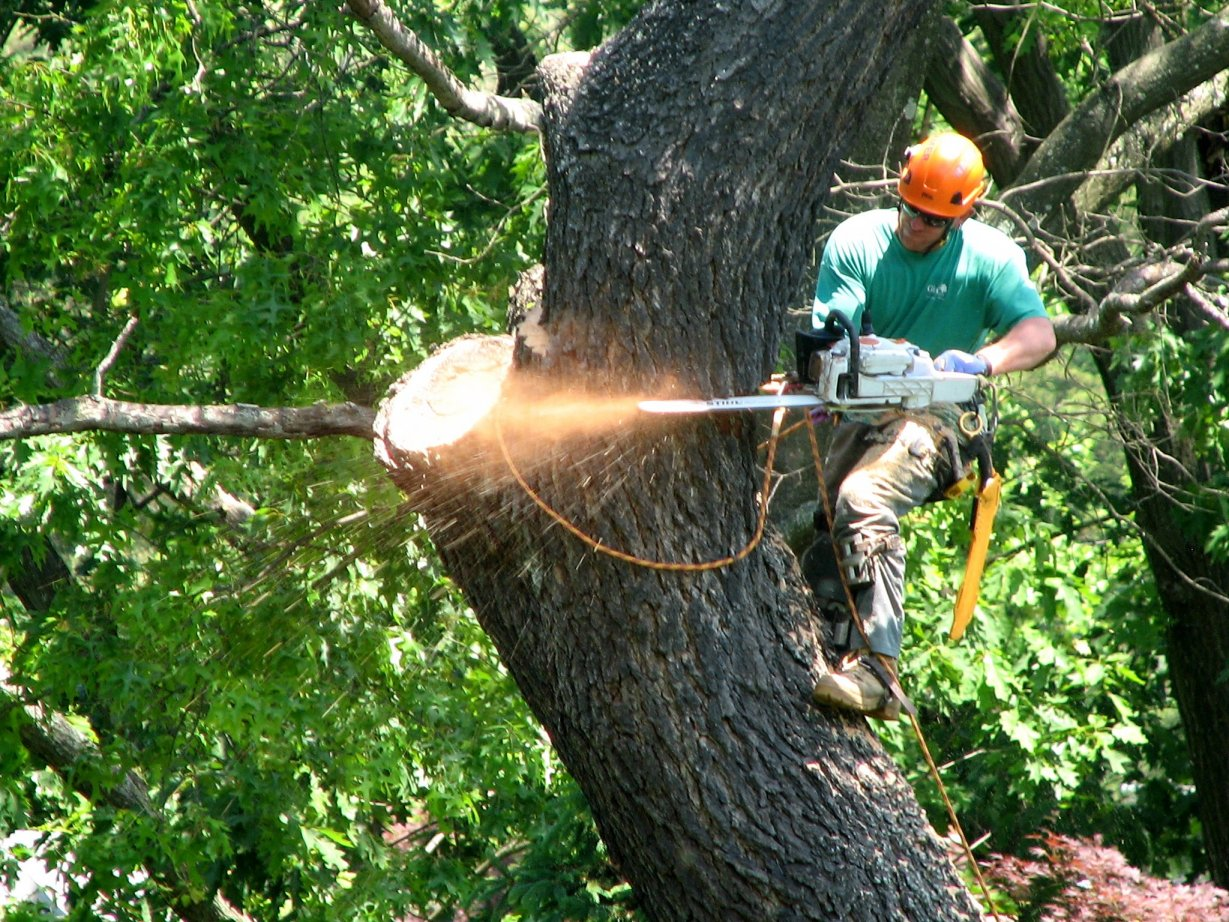 WHEN YOU SHOULD CALL TREE SERVICE COMPANY